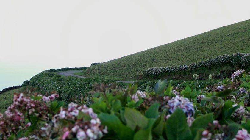 Ilha do Corvo próximo da imunidade de grupo. Foto: Kathy Rita