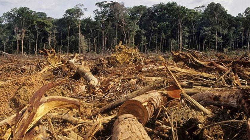 """""""O modo como extraímos bens da natureza, como a gente comercializa e consume, está a deixar marcas."""" Foto: EPA"""